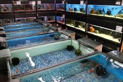 Aquarium Section
